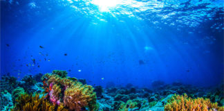 oceani barriera corallina